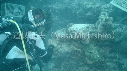 サンゴ植え付け-2.jpg