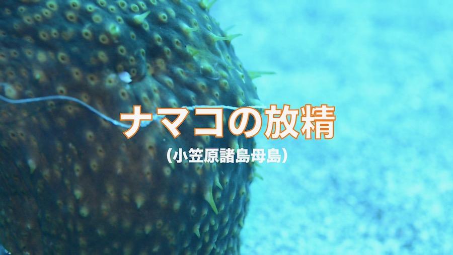 ナマコ放精_1.1.1.jpeg