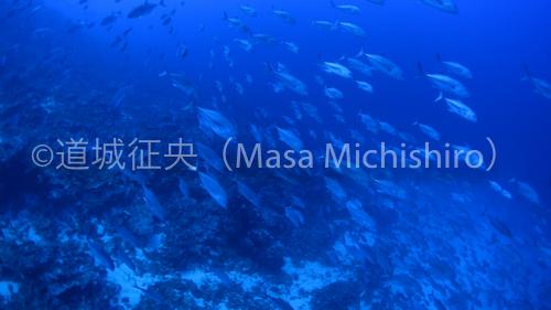 ポンペイ回遊魚-2.jpg