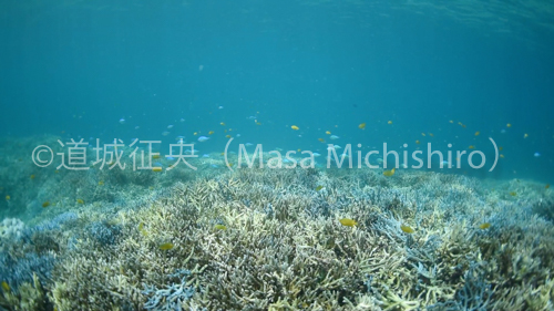 西表島サンゴ礁-2.jpg