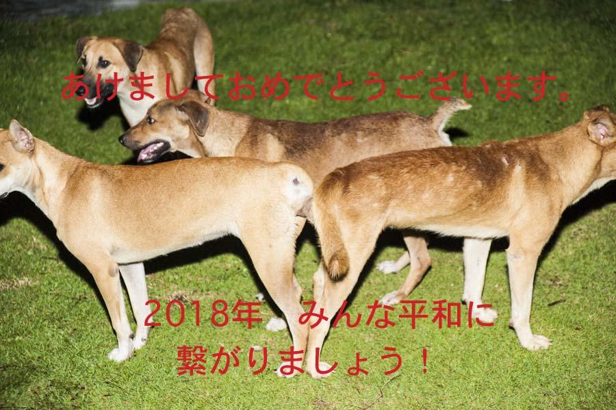DSC_0087のコピー.jpg