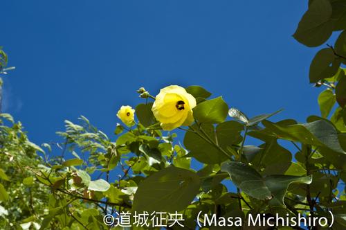 DSC_6891.jpg